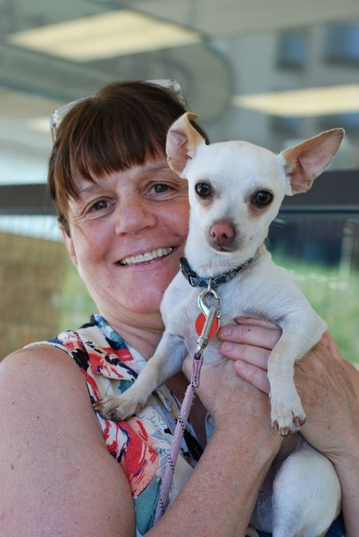 Nancy O Connor holds Mojo, a Chihuahua who is looking for a new home, while volunteering at Furburbia. (Sara Tabin/Park Record)
