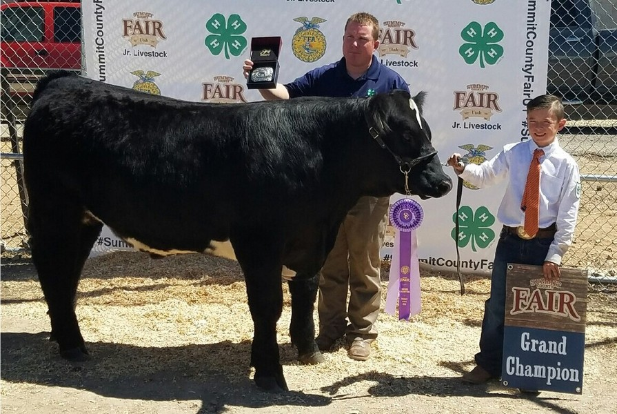Summit County Junior Livestock Auction Nets More Than