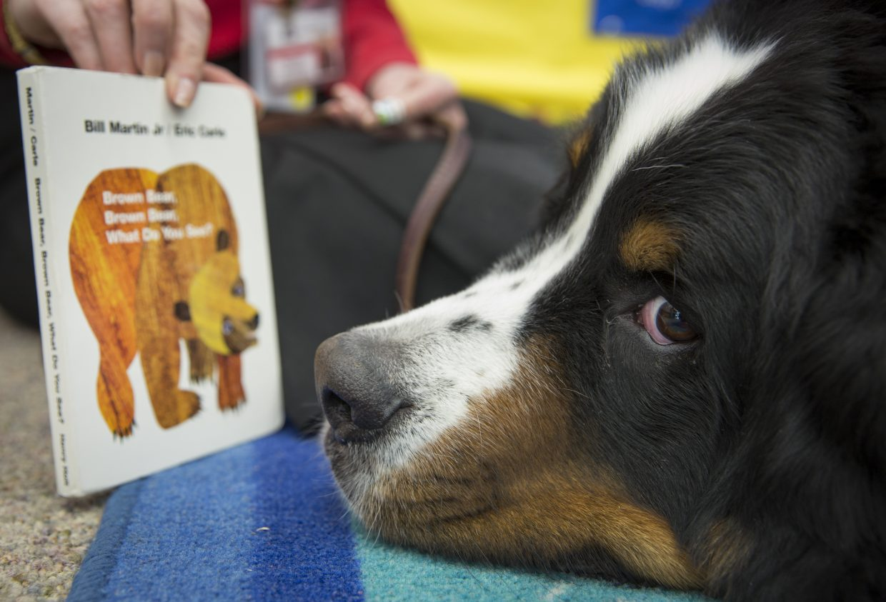 Benno, a five-year-old Bernese Mountain therapy dog, lies next to a copy of the book