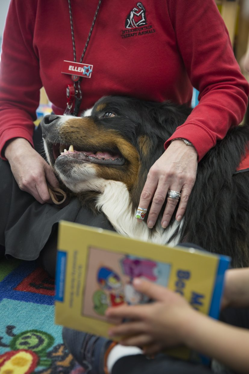 Benno, a five-year-old Bernese Mountain therapy dog, rests his head on Ellen Folke's lap during story time at Trailside Elementary on Thursday, November 30, 2017. The kindergarten class took turns practicing their reading skills by reading to Benno, who is associated with Intermountain Therapy Animals. (Tanzi Propst/Park Record)