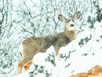 Tips for when you see wildlife while visiting Park City